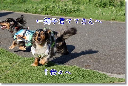 3V9A3853.jpg