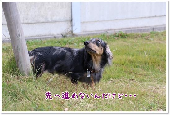 3V9A9003.jpg