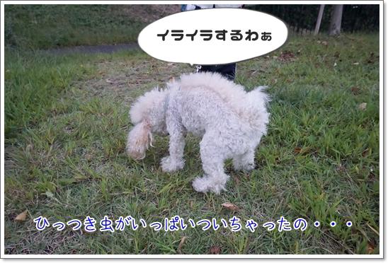 DSC01087.jpg