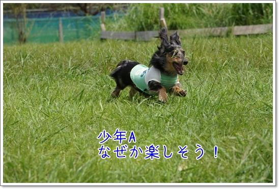 DSC08882.jpg