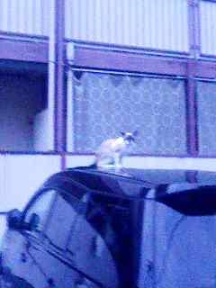 猫と車 150822_0522~001