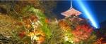 kiyomizu-temple-lightup.jpg