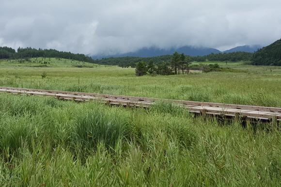 タデ原湿原5