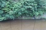 野迫川温泉8