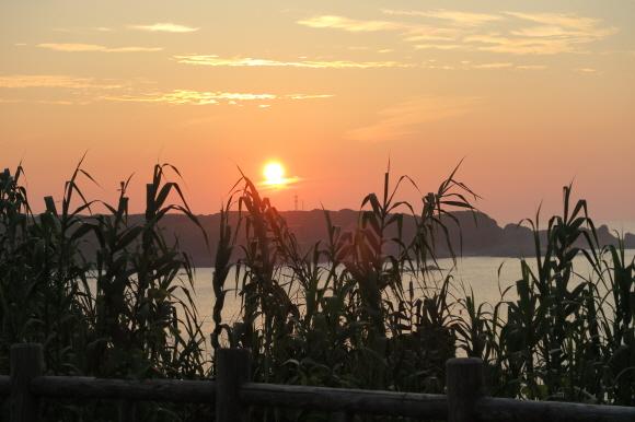 潮岬の芝キャンプ場9