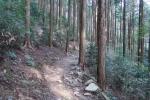 県民の森キャンプ場内8
