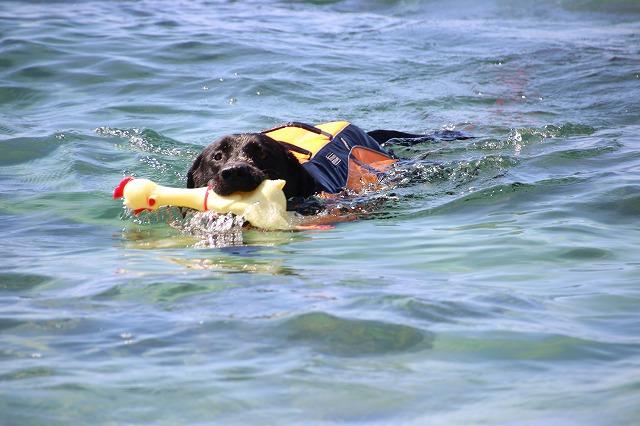 真剣に泳ぐ