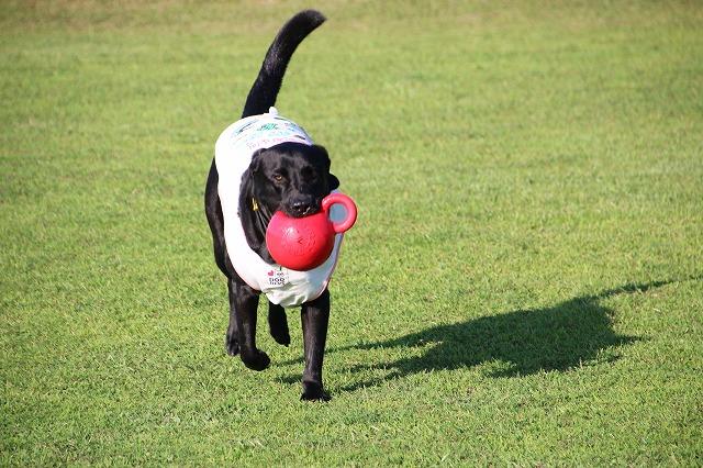 ボールをレトリーブ