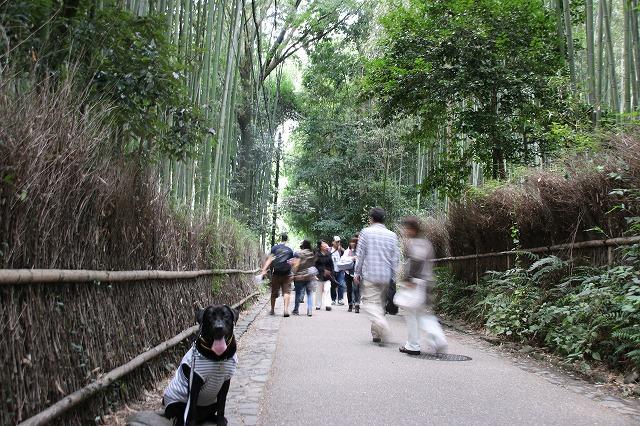竹林の径1