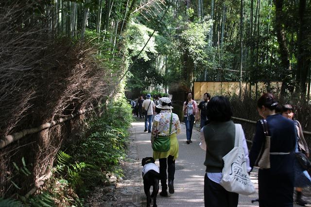 竹林の径2