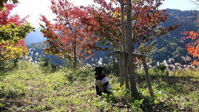 卯の花街道の紅葉