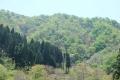 パステル・カラーの山並み