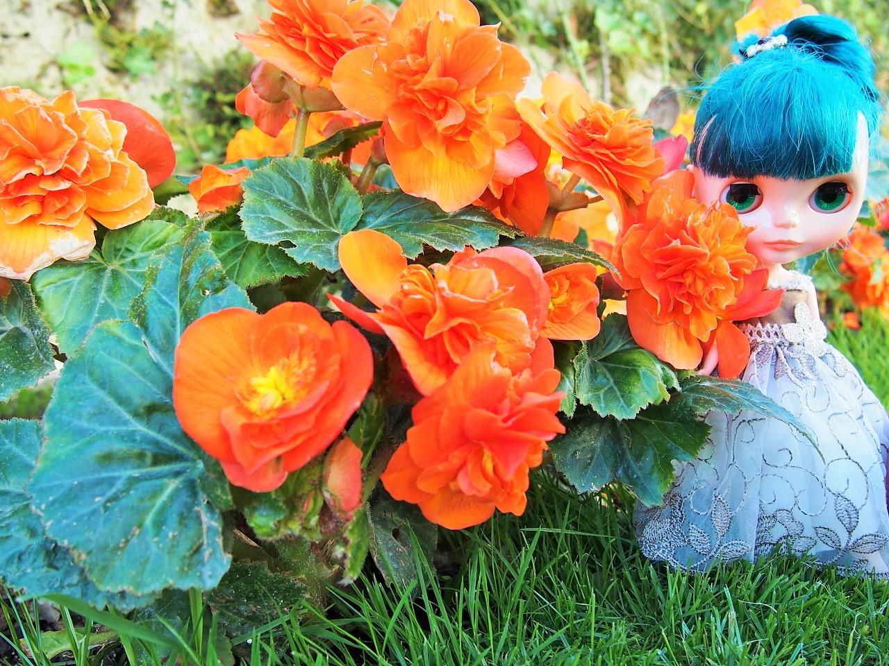 ザルツブルグ オレンジのお花と