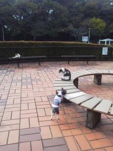 さぎ山記念公園4