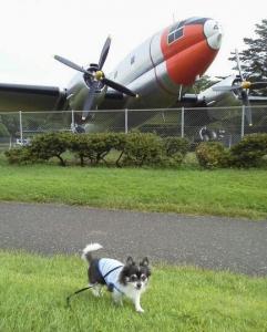 航空公園1
