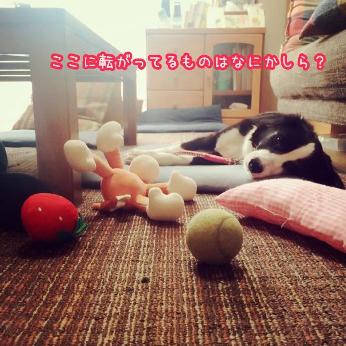 rin_03.jpg