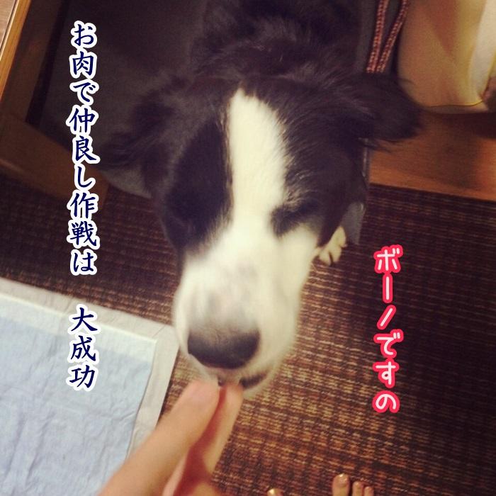 rin_05.jpg