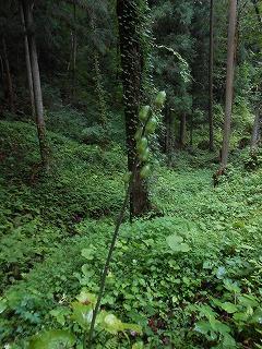 s-仙台の風景など 173