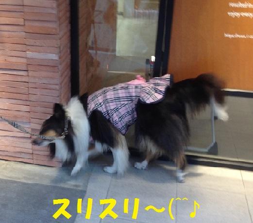 鎌倉散歩91