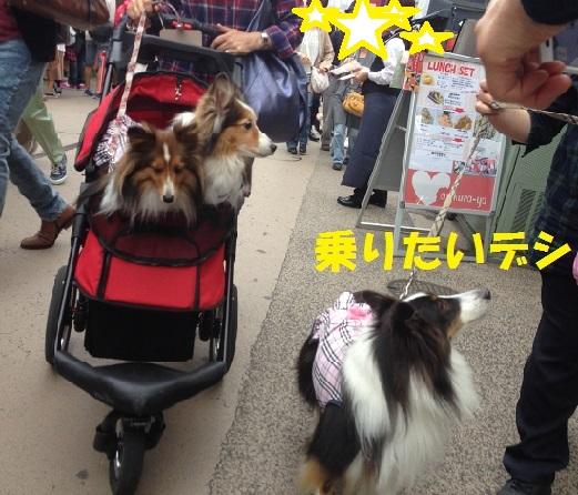 鎌倉散歩61
