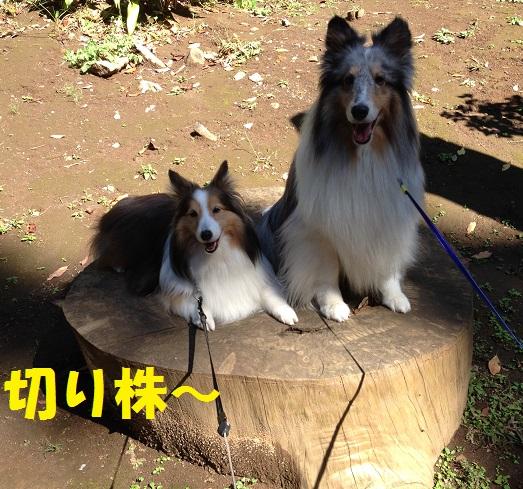 江ノ島散歩93