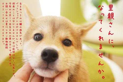 柴ポスターブログ用