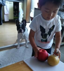 りんご三昧1