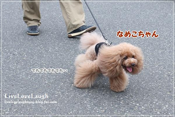 IMG_5960ひるよこ6