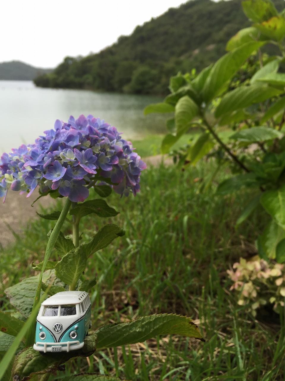 季節外れの紫陽花。