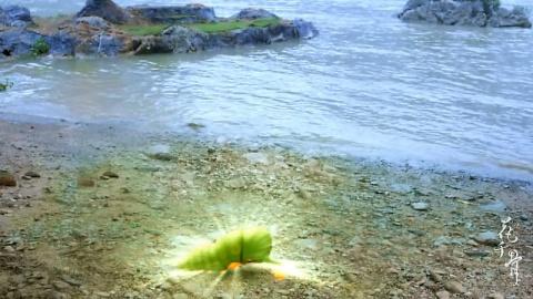 journey_of_flower_13_03_001.jpg