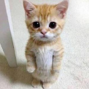 loveryloverycat