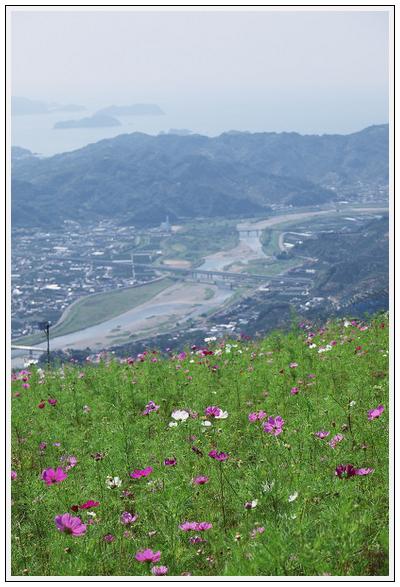 2015年9月29日 鷲ヶ峰コスモスパーク (4)