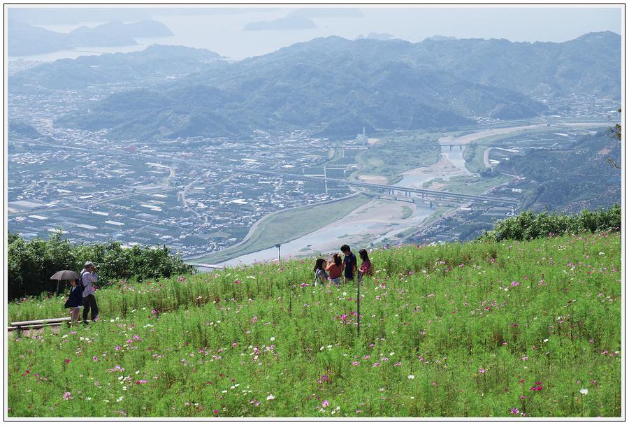 2015年9月29日 鷲ヶ峰コスモスパーク (6)