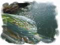 疎水の煌き