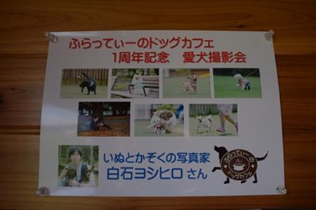 飛行犬撮影会18