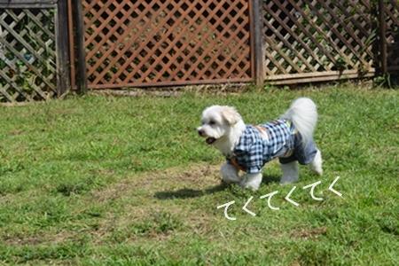 飛行犬撮影会15