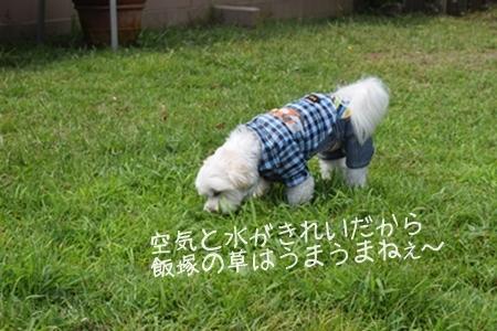 飛行犬撮影会16