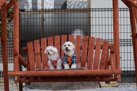 飛行犬撮影会20