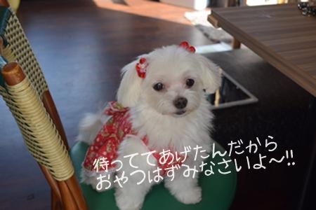 飛行犬撮影会21