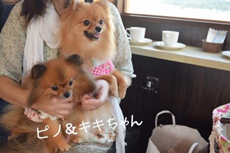 飛行犬撮影会12