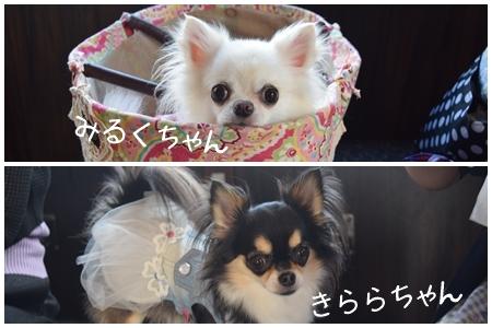 飛行犬撮影会14