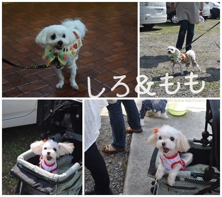 動愛園13