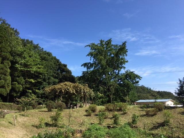 一本杉公園