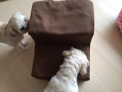 由香から犬用階段