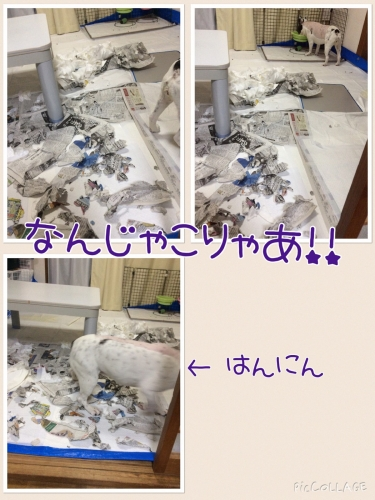 20150831194917a1c.jpg