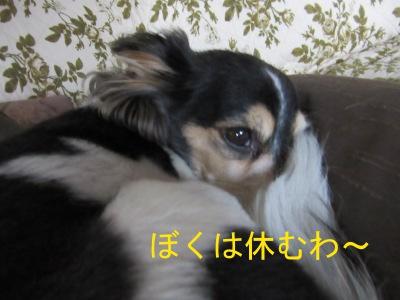 IMG_0682df.jpg