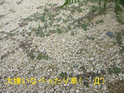 IMG_9610a.jpg