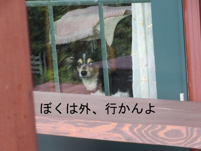 IMG_9611a.jpg