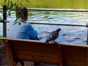 おじさんと鳩