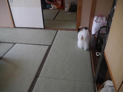 広島9−2